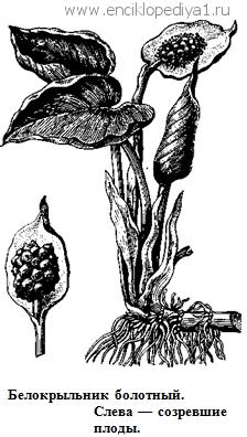 растительные лекарства от паразитов в организме человека